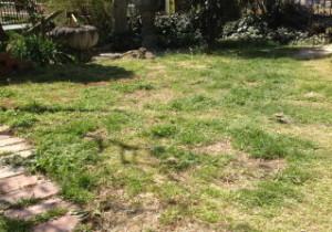 お庭で撮影