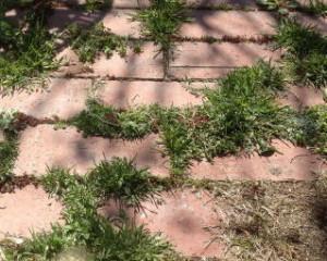 レンガの隙間の雑草