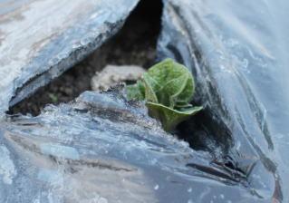 小さい芽 撮影